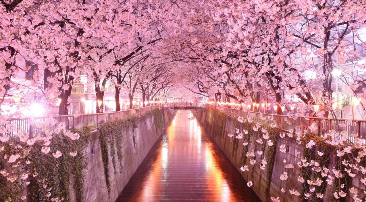 Hanami-Giappone